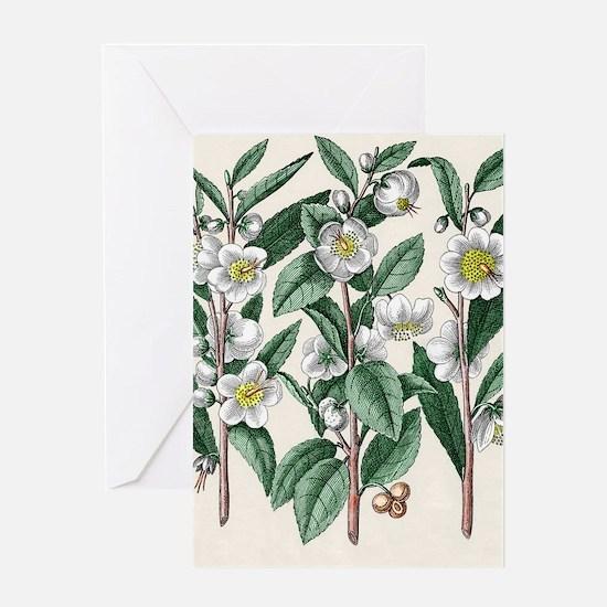 Tea plant Greeting Card