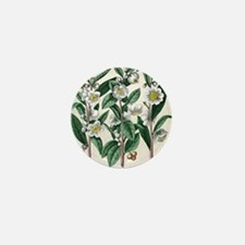 Tea plant Mini Button