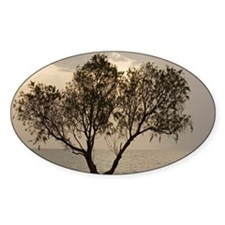 Tamarisk tree Decal