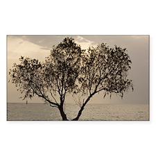 Tamarisk tree Decal