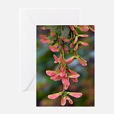 Sycamore (Acer pseudoplatanus) Greeting Card