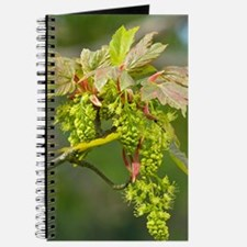 Sycamore (Acer pseudoplatanus) Journal