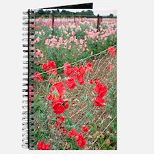 Sweet pea (Lathyrus odoratus) Journal
