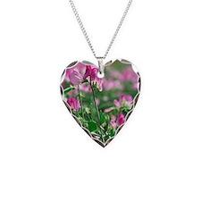 Sweet pea (Lathyrus odoratus  Necklace