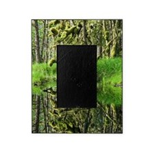 Swamp Picture Frame