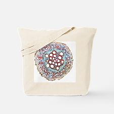 Sweet potato root, light micrograph Tote Bag