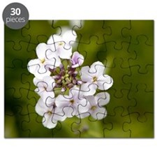Sweet rocket (Hesperis matronalis) Puzzle