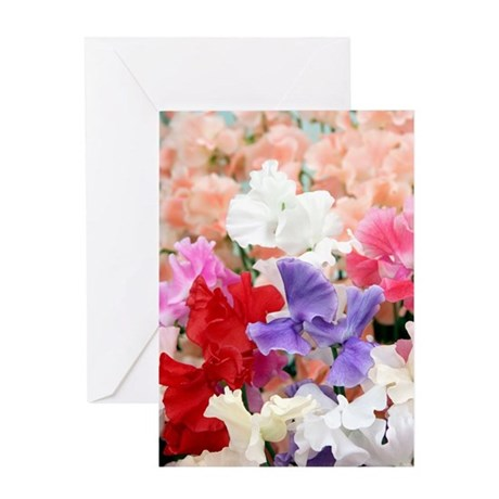 Sweet pea (Lathryrus odoratus) Greeting Card
