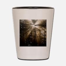 Sunlight through pine trees Shot Glass