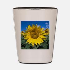 Sunflowers Shot Glass