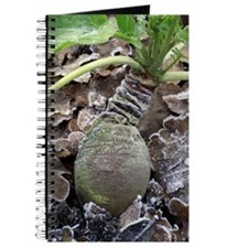 Swede (Brassica napus 'Marian') Journal