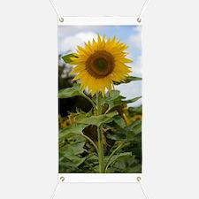 Sunflower (Helianthus annuus) Banner