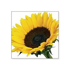 """Sunflower (Helianthus annuu Square Sticker 3"""" x 3"""""""