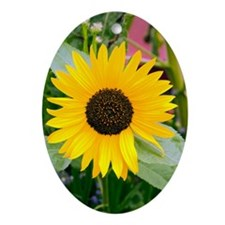 Sunflower (Helianthus) Oval Ornament