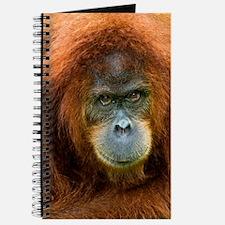 Sumatran orangutan Journal
