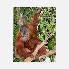 Sumatran orangutan Twin Duvet