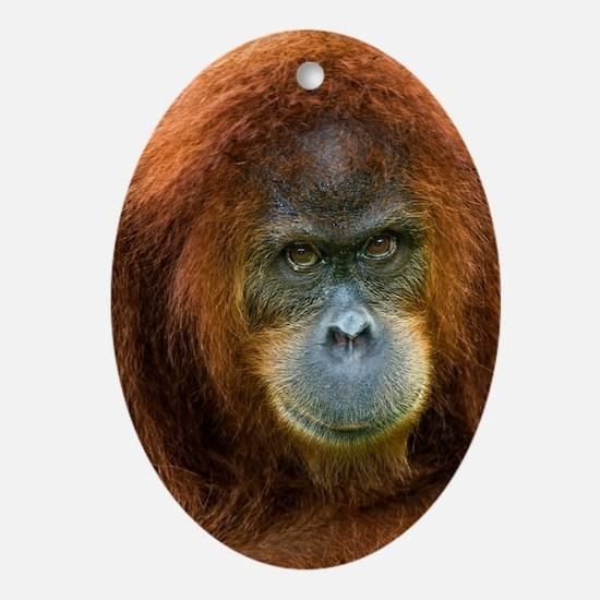 Sumatran orangutan Oval Ornament