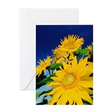 Sunflowers against the sky Greeting Card