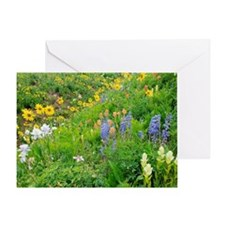 Summer mountain flowers Greeting Card