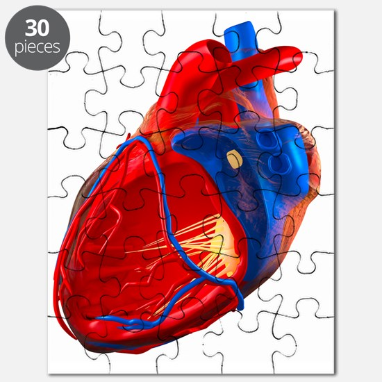 Structure of a human heart, artwork Puzzle