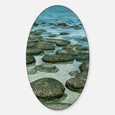 Stromatolites Decal