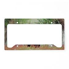 Striated caracara License Plate Holder