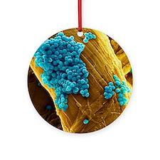 Streptococcus pneumoniae bacteria,  Round Ornament
