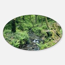 Stream and woodland in Devon Decal