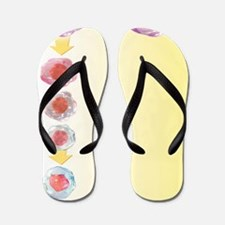 Stem cell development, artwork Flip Flops