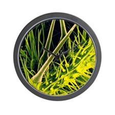 Stinging hairs on nettle Wall Clock