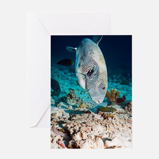 Star puffer Greeting Card