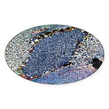 Staurolite crystal, light micrograp Decal