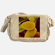 Starch grains from potato cells, SEM Messenger Bag