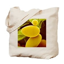 Starch grains from potato cells, SEM Tote Bag