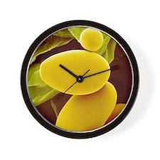 Starch grains from potato cells, SEM Wall Clock