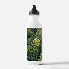 Spurge (Euphorbia x ma Water Bottle