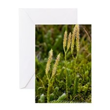 Stag's-horn Clubmoss (Lycopodium) Greeting Card