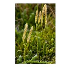 Stag's-horn Clubmoss (Lyc Postcards (Package of 8)