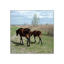 "Payne's Prairie Wild Horses Square Sticker 3"" x 3"""