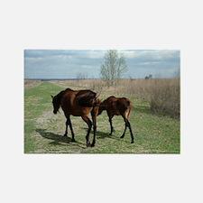 Payne's Prairie Wild Horses Minac Rectangle Magnet