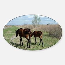 Payne's Prairie Wild Horses Minacop Sticker (Oval)