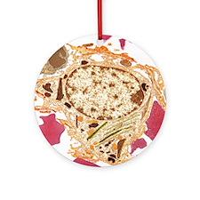 Spleen cell, TEM Round Ornament
