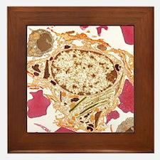 Spleen cell, TEM Framed Tile