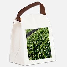 Spinach crop Canvas Lunch Bag