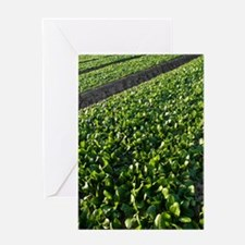 Spinach crop Greeting Card