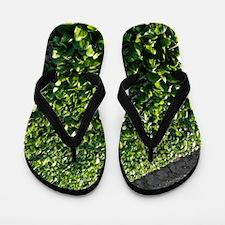 Spinach crop Flip Flops