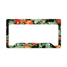 Spanish flag (Lantana camara) License Plate Holder