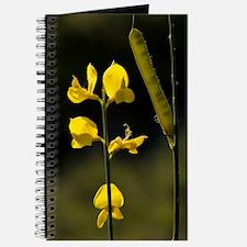 Spanish Broom (Spartium junceum) Journal