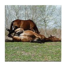 Payne's Prairie Wild Horses Minacopy  Tile Coaster