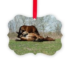 Payne's Prairie Wild Horses Minac Ornament